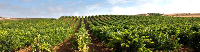 Vineyards photo